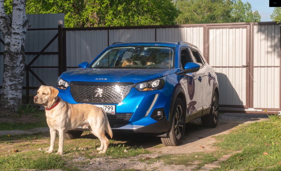 машина и собака